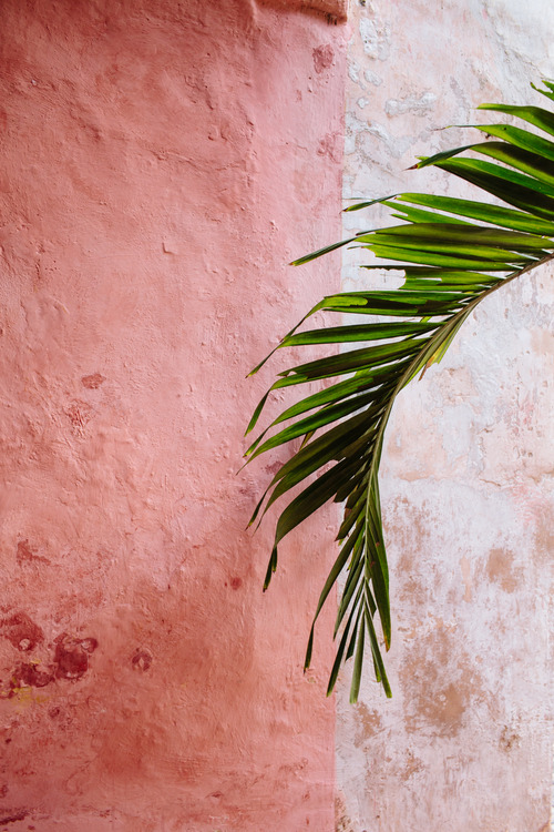 painted-wall-pink